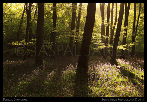 Jaspal-Jandu-Lavender-Spring